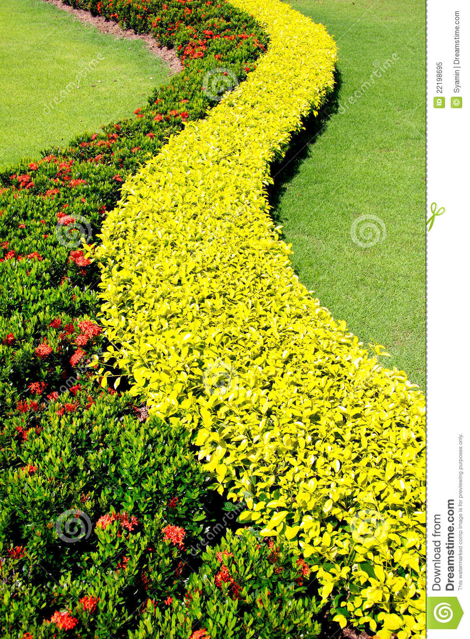 Shrubs garden decoration stock image image of for Arbustos con flores para jardin