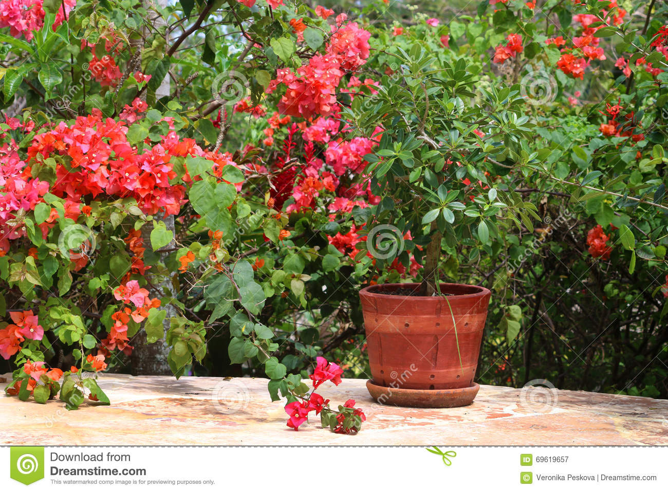 Shrubs With Pink Flowers And Potted Plant Stock Image Image Of