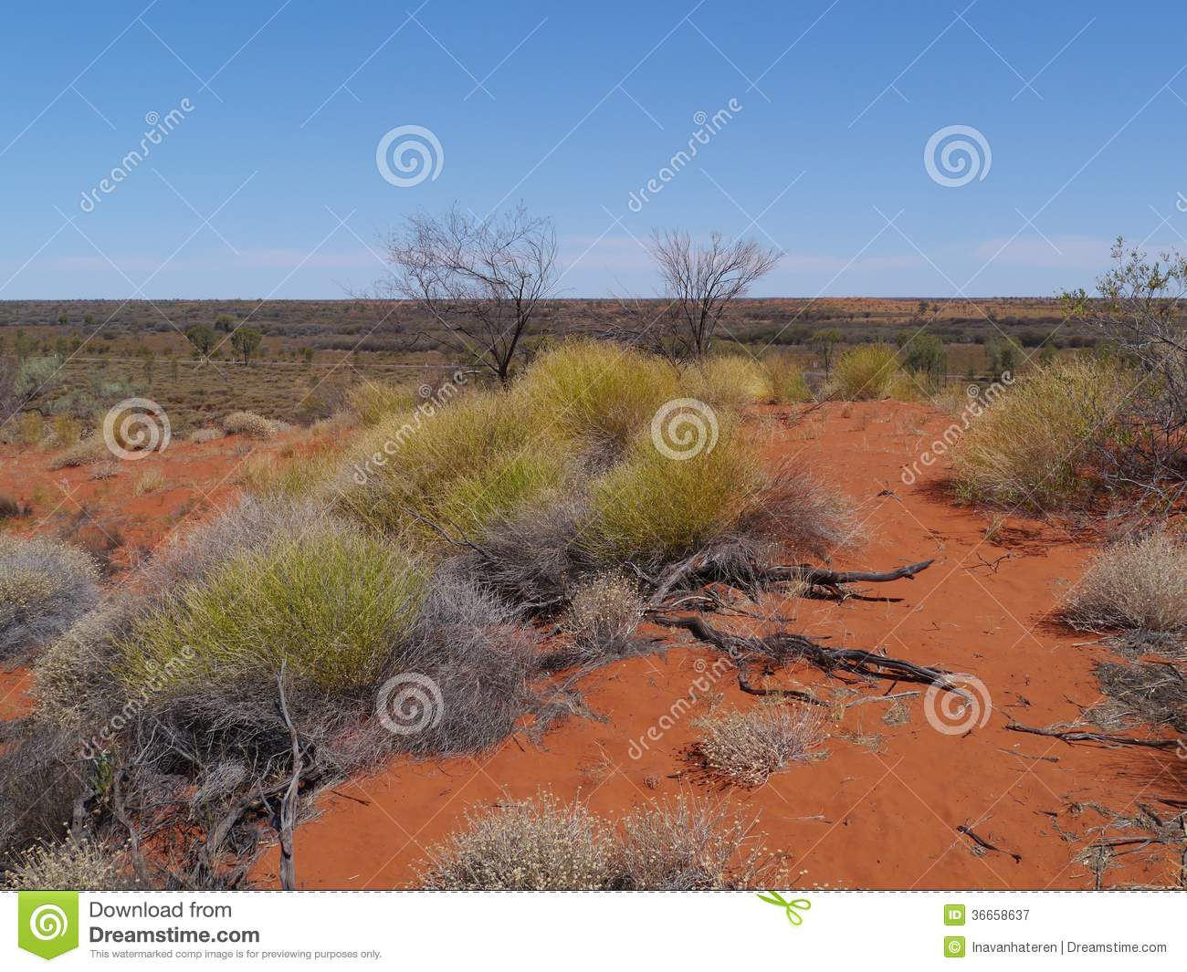 Shrubs And Plants In The Outback Stock Image Image Of