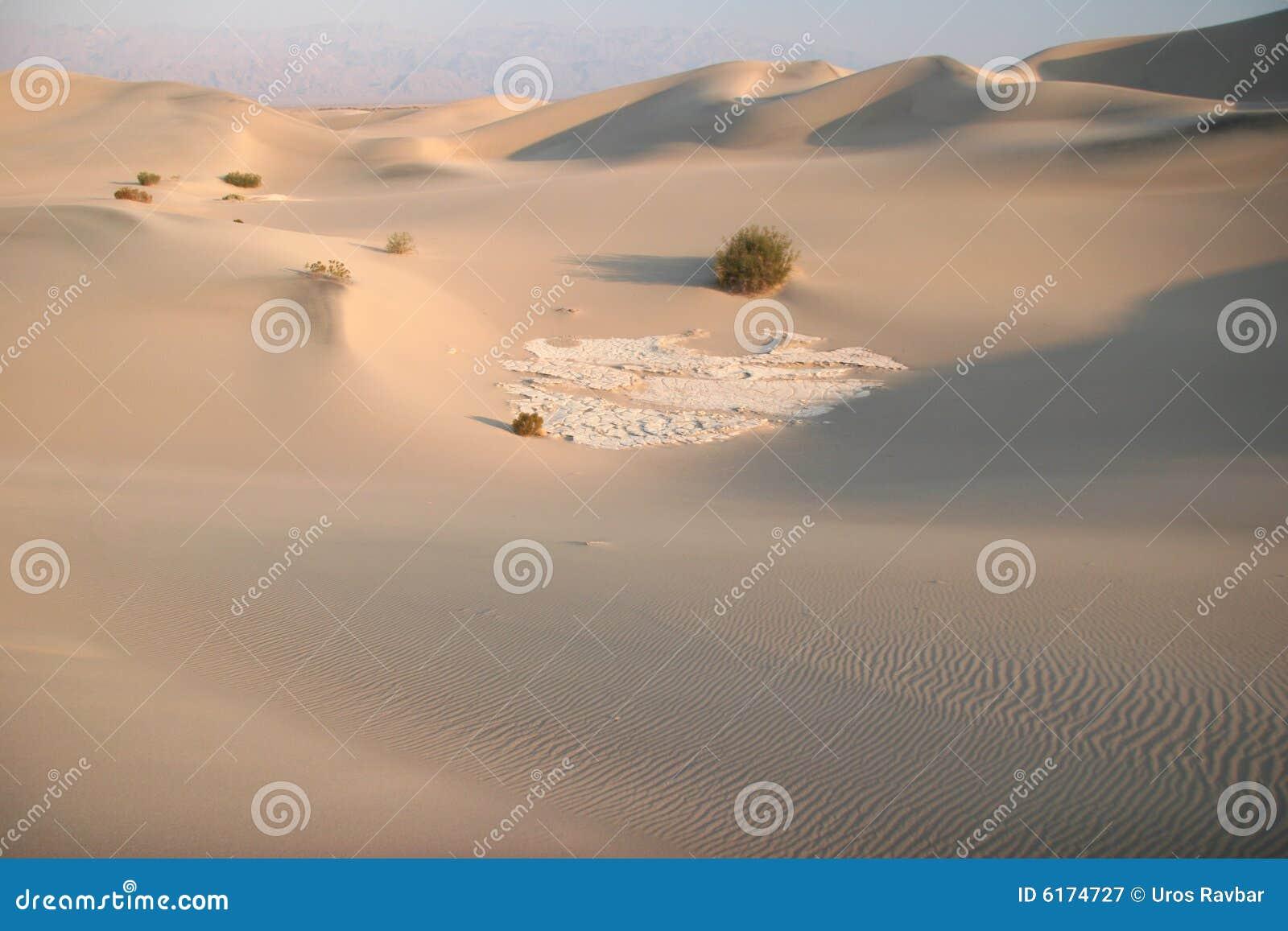 Shrubs in sand dunes