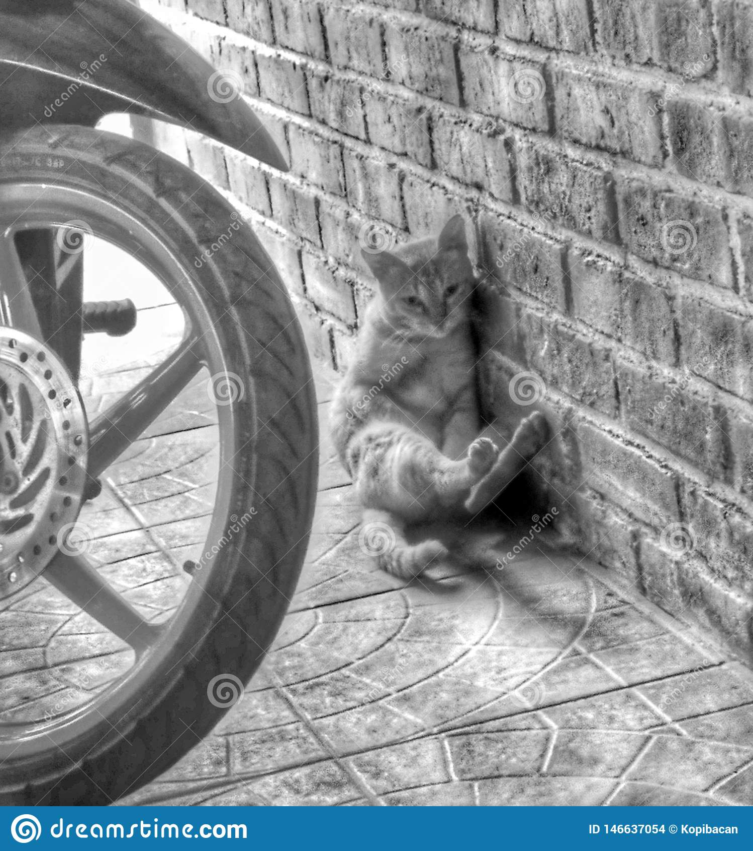 shy shy cat beside the wall