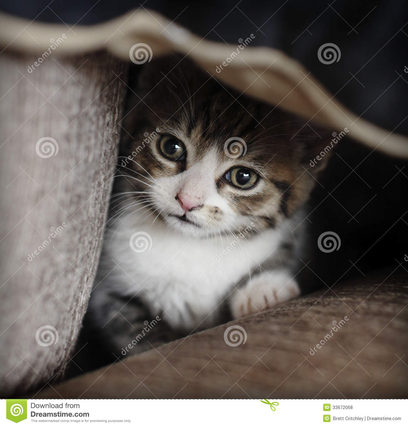 Shy kitten hiding stock photo. Image of scared, shelter ...Scared Kitten Hiding