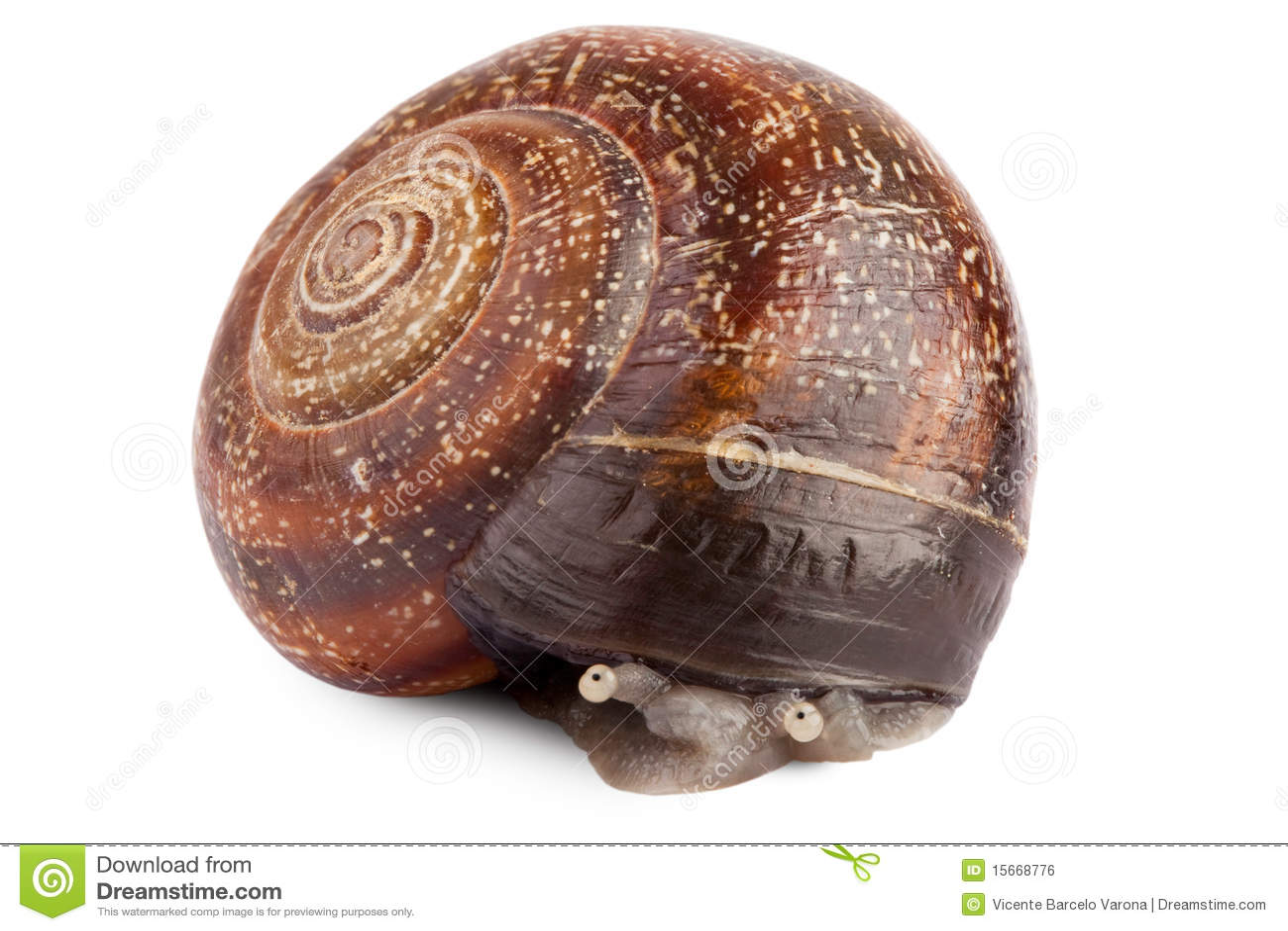 shy snail royalty free stock image image 15668776 blue crab clipart free blue crab clip art free