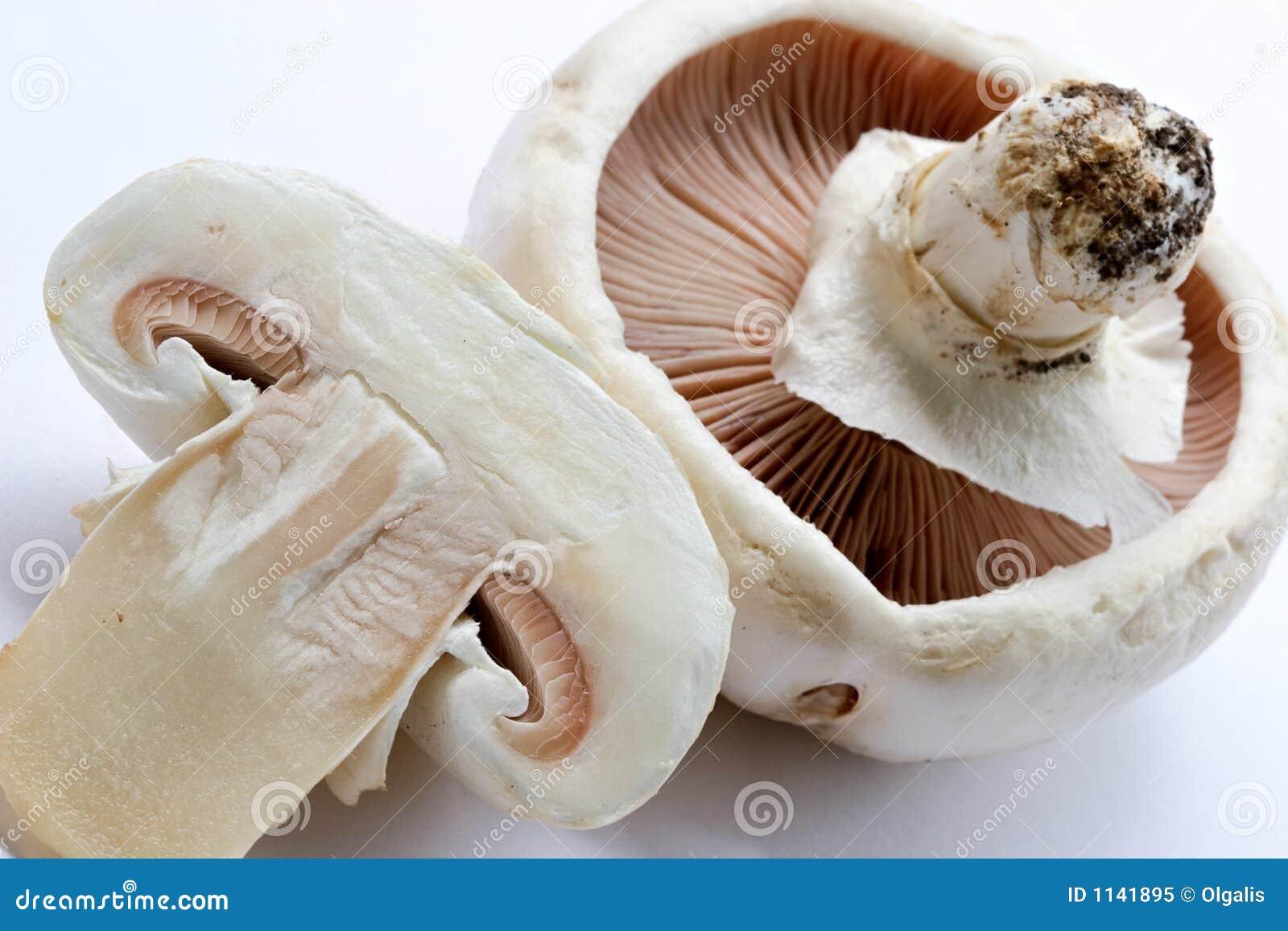 Gocce o unguento da un fungo