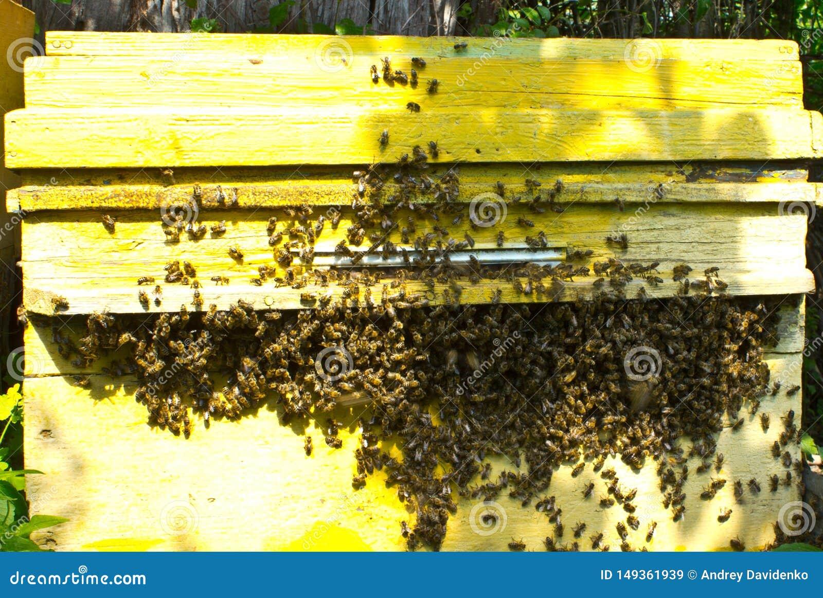 Si? mrowi? pszcz??