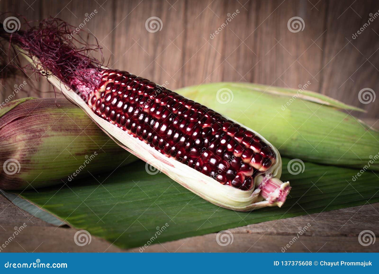 Siam Rubinowa królowa jest super słodkim kukurudzą z czerwonym kolorem, może być, jedzącym miejsca nasunięciem świeżym miejscem i