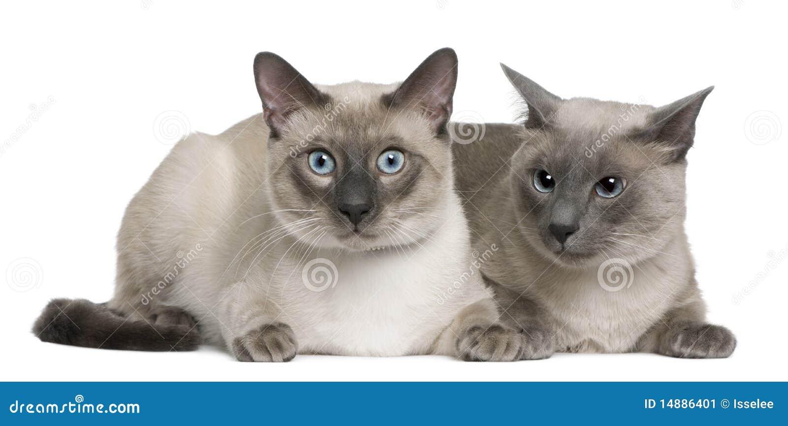 kitten adoptions seattle
