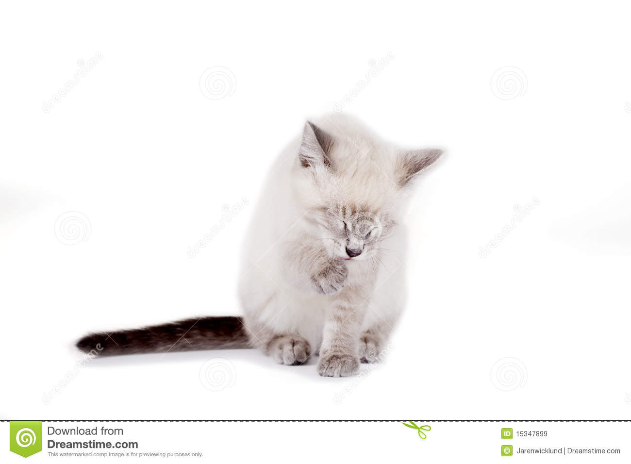 Designer Creates Amazing Playgrounds For Cats together with Royalty Free Stock Photography Domestic Cat Image8174027 as well Stock Photo Sleeping Tiger Claws Show His Image45152951 as well Cat Playground Room Goldtatze moreover 181761173805. on cat scratching paw