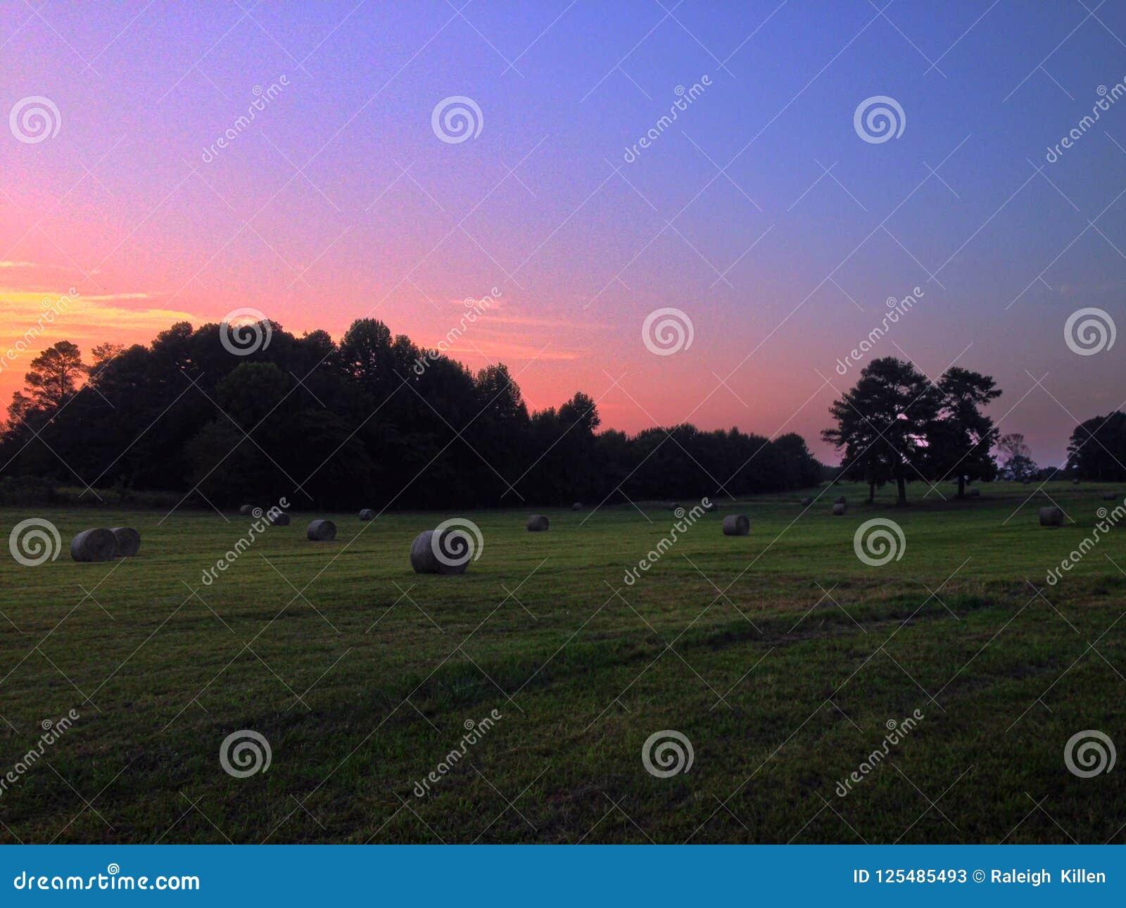 Siana pole przy zmierzchem