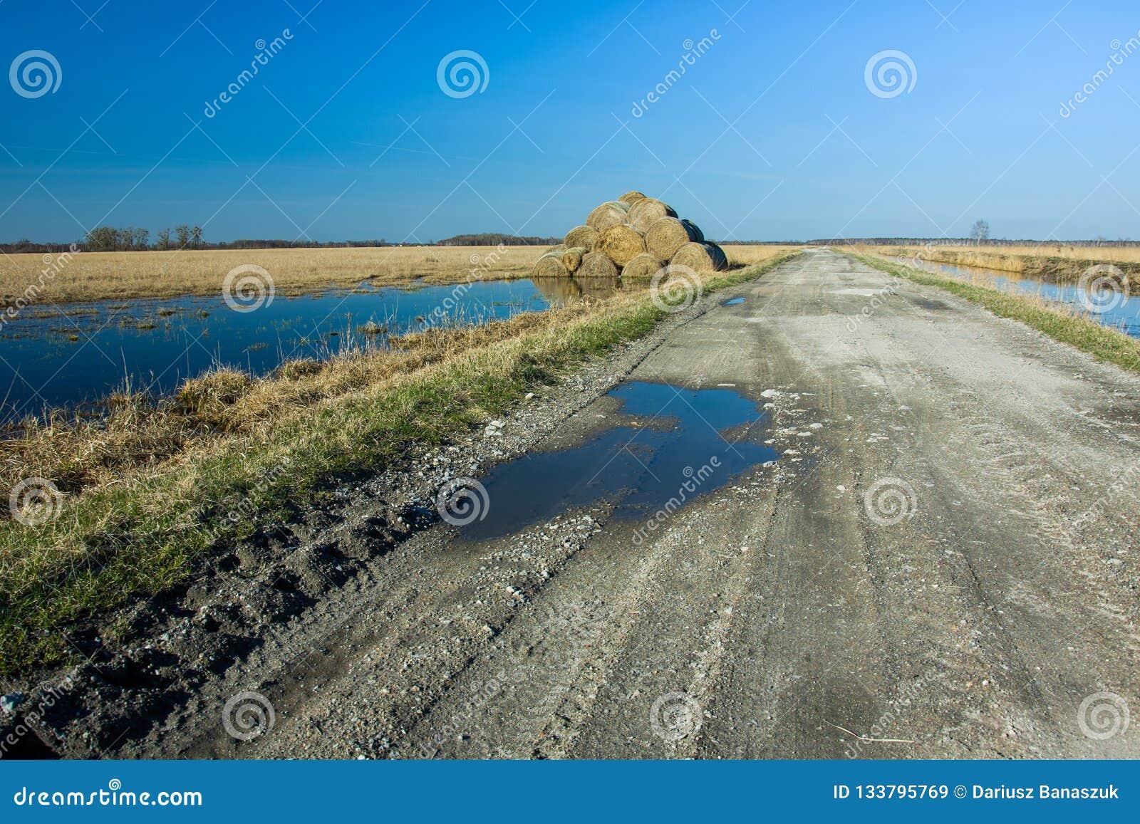 Siano bele na zalewającej wiejskiej drodze i polu