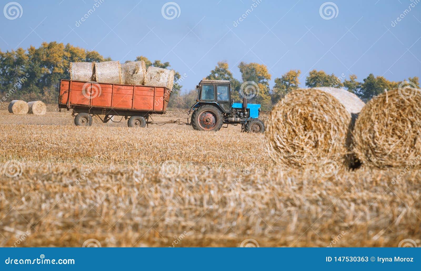 Siano kaucja zbiera w cudownym jesie? rolnik?w pola krajobrazie z siano stertami