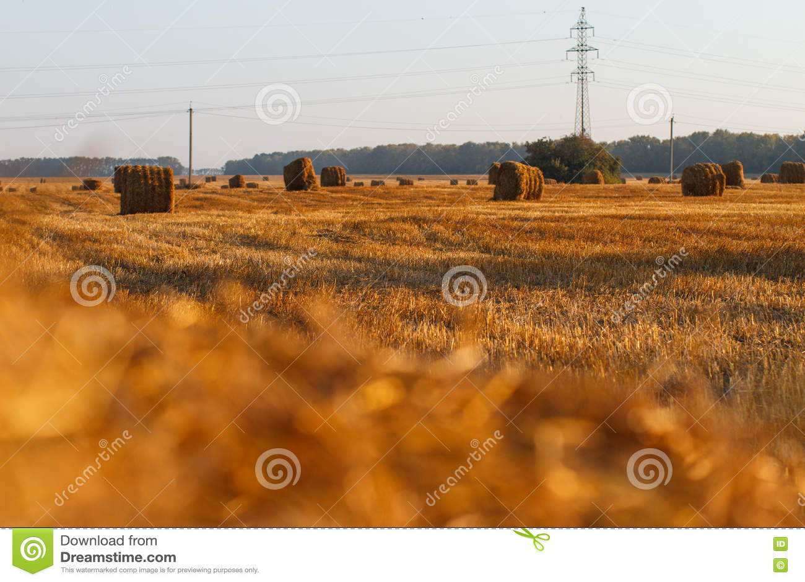 Siano kaucja zbiera w złotym pole krajobrazie
