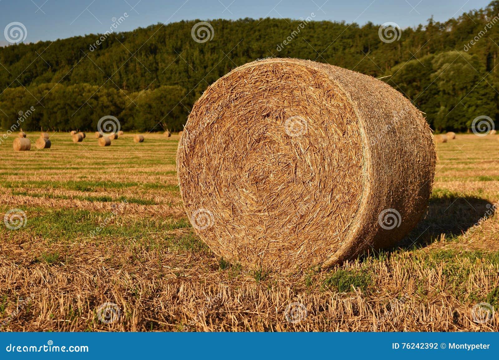 Siano kaucja zbiera w złotym pole krajobrazie Lato Rolna sceneria z Haystack na tle Piękny zmierzch