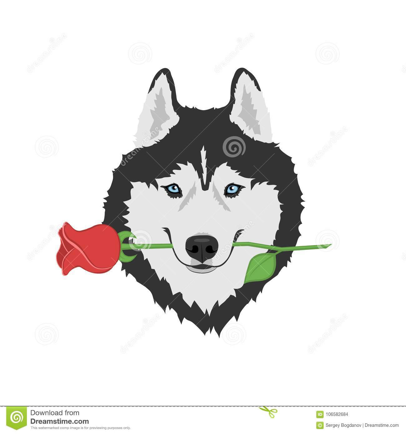 Dog with rose in mouth. Black and white Siberian husky with blue eyes.  Greeting card for Valentine`s day b5d1f66a4b