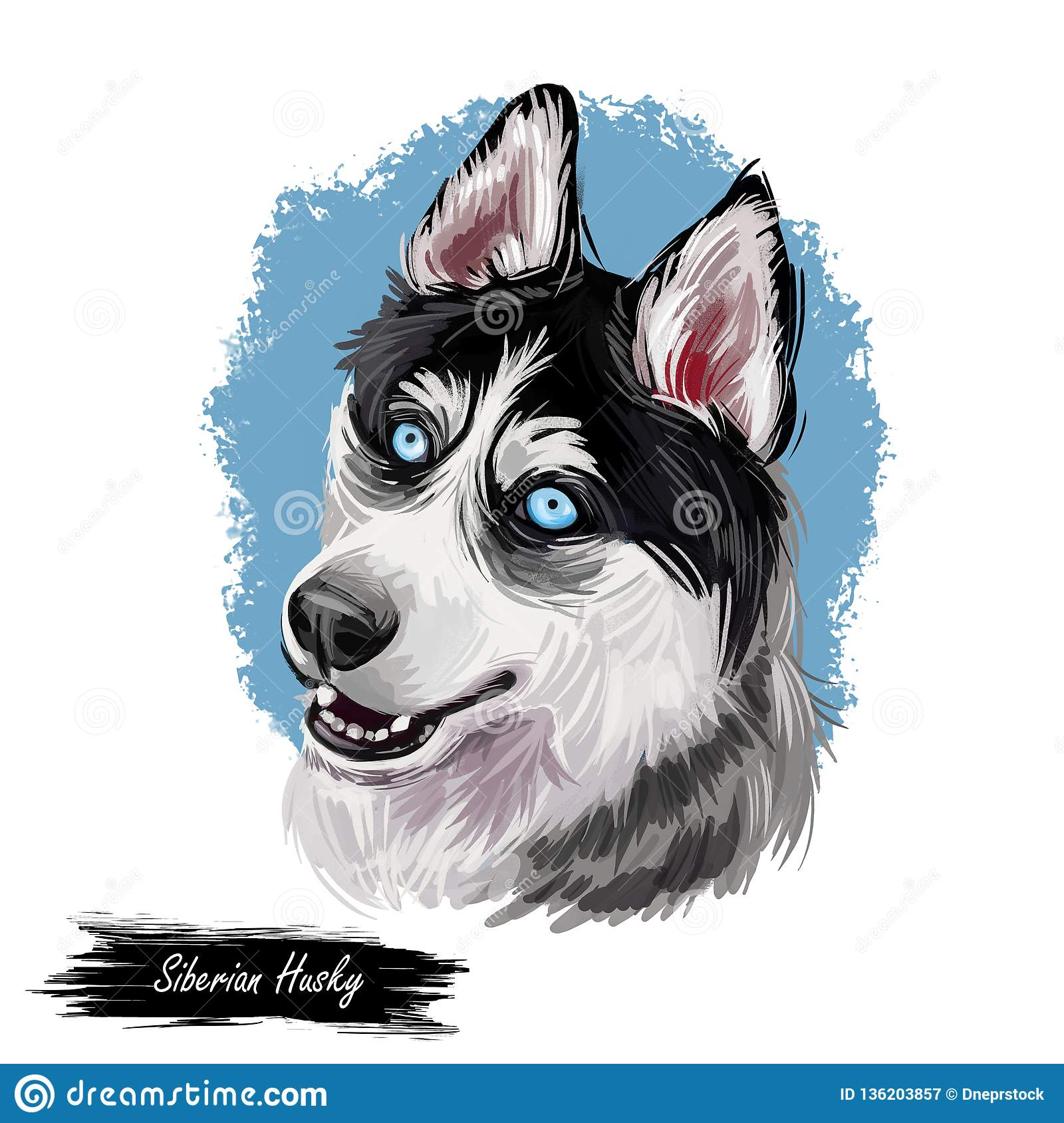 Siberian Husky dog hound with clear eyes digital art. Animal watercolor portrait closeup isolated muzzle of pet, canine