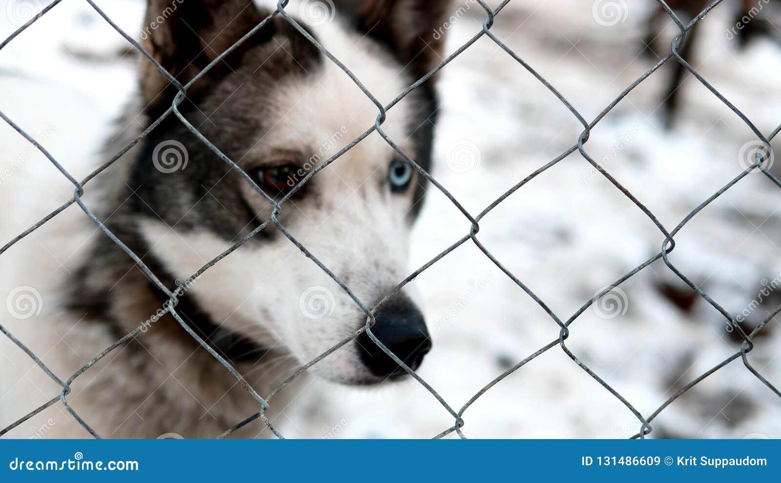 Husky Wolf Dog Vector Patterns Cartoon Vector ...