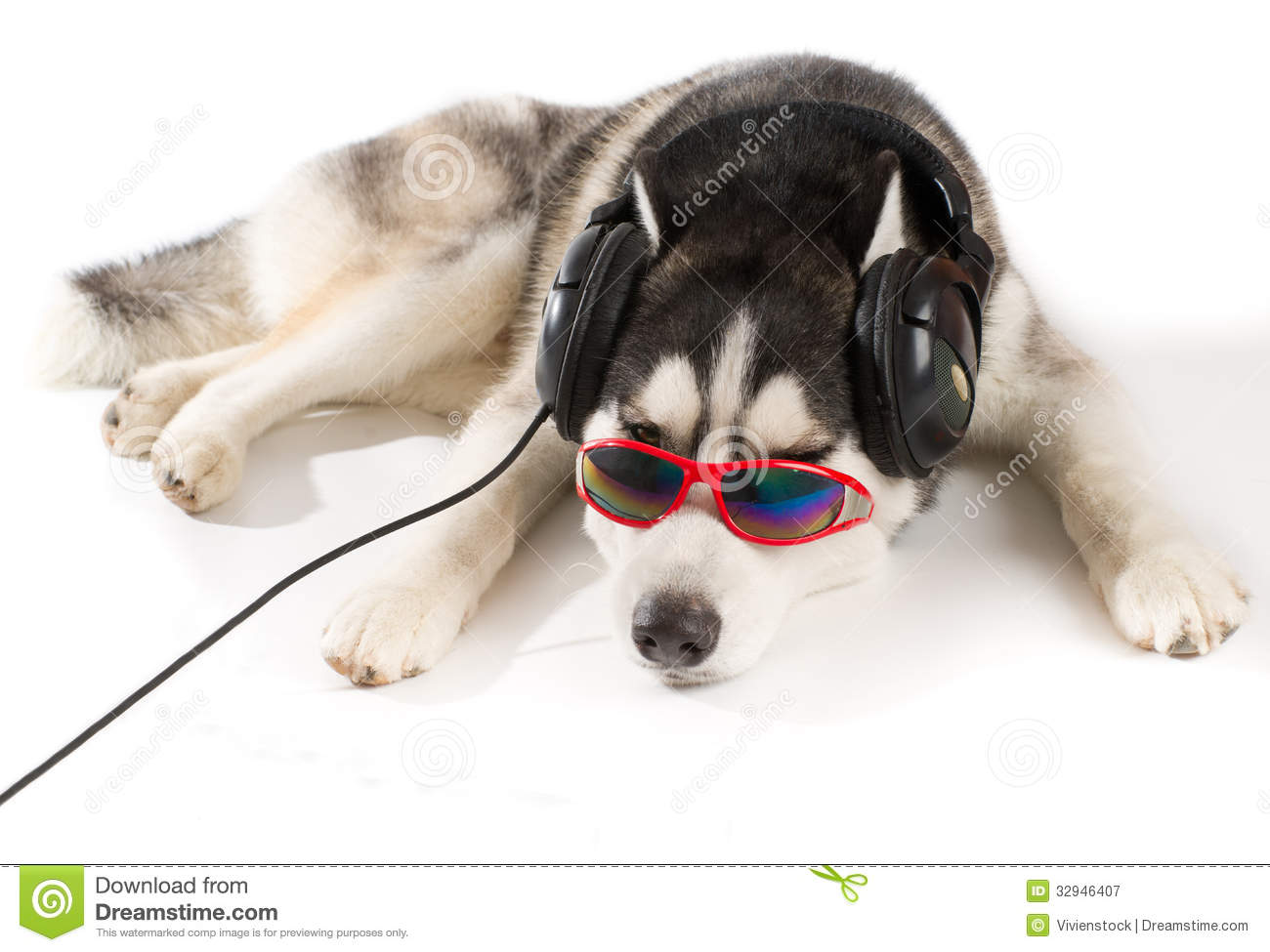 Siberian Husky In Headphones Royalty Free Stock Photography - Image ...