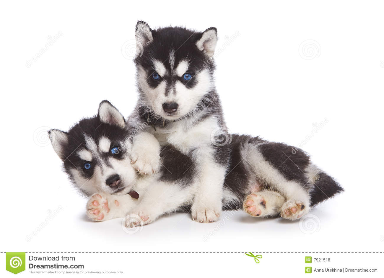 free clipart husky dog - photo #38