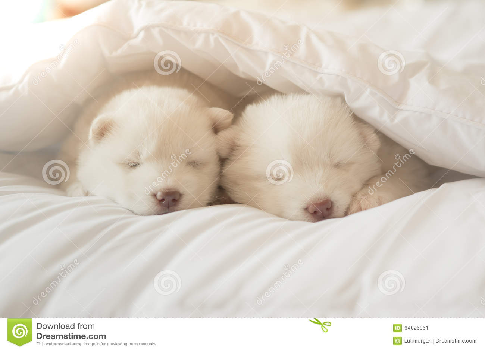 Puppy Sleeping Under Bed