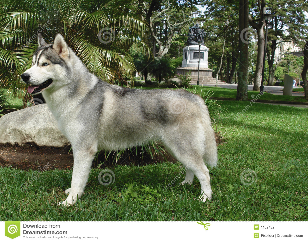 Small Breed Wolf Dog