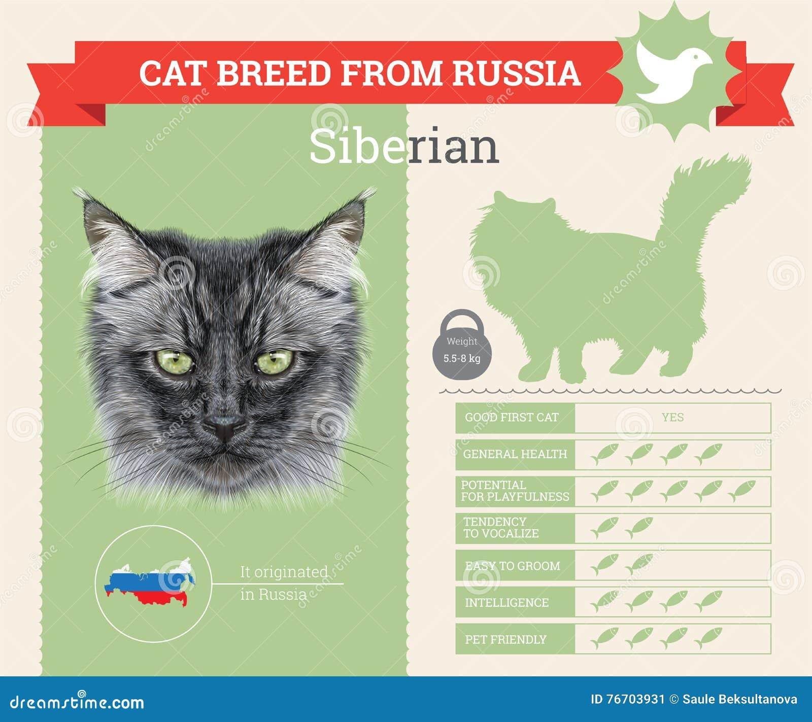 Siberian kattavelinfographics