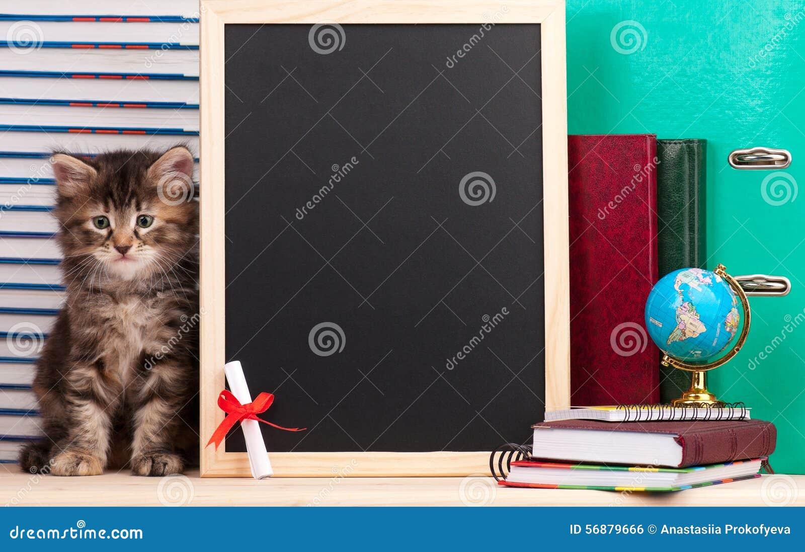 Siberisch katje
