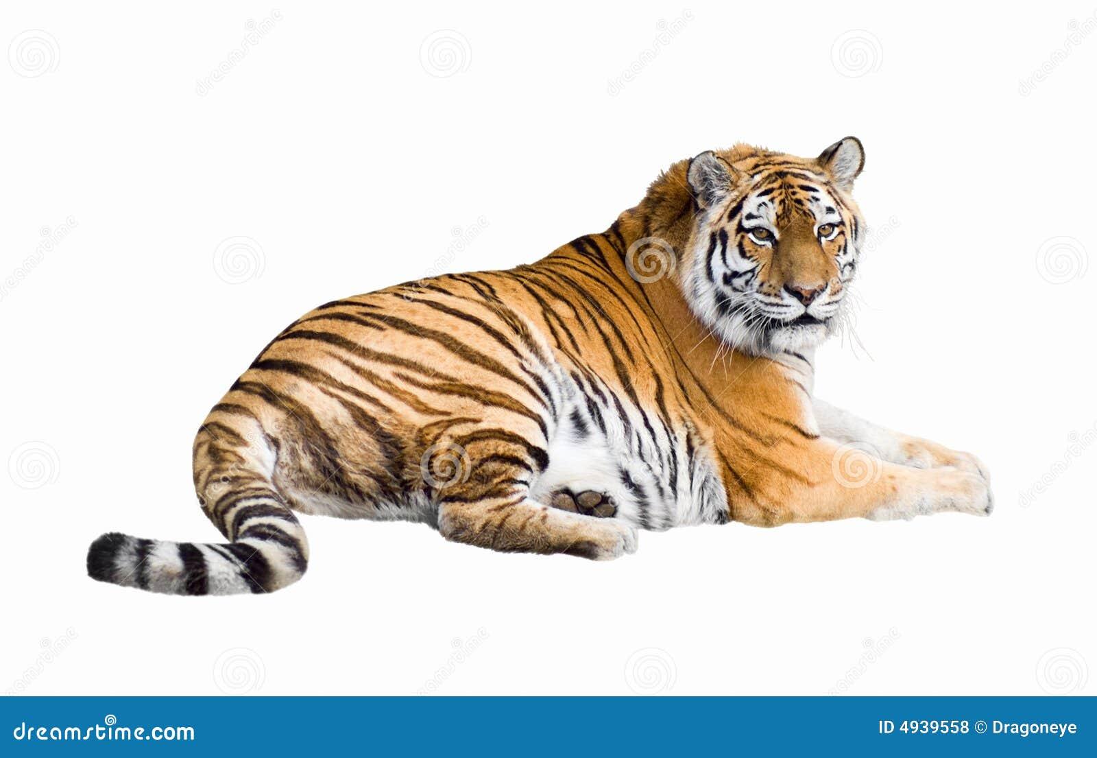 Siberisch tijgerknipsel