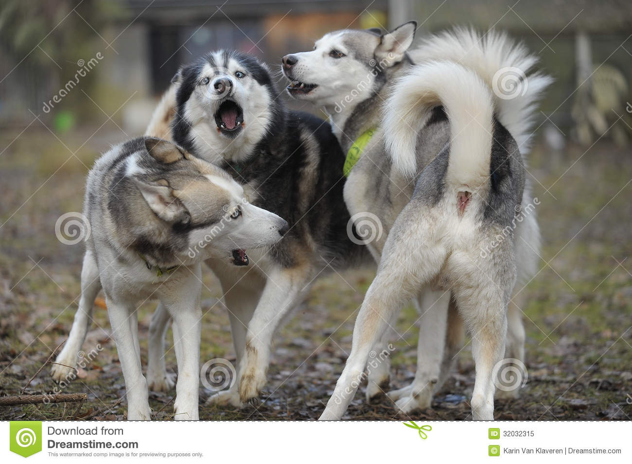 Videos Of Dogs Playing And Barking