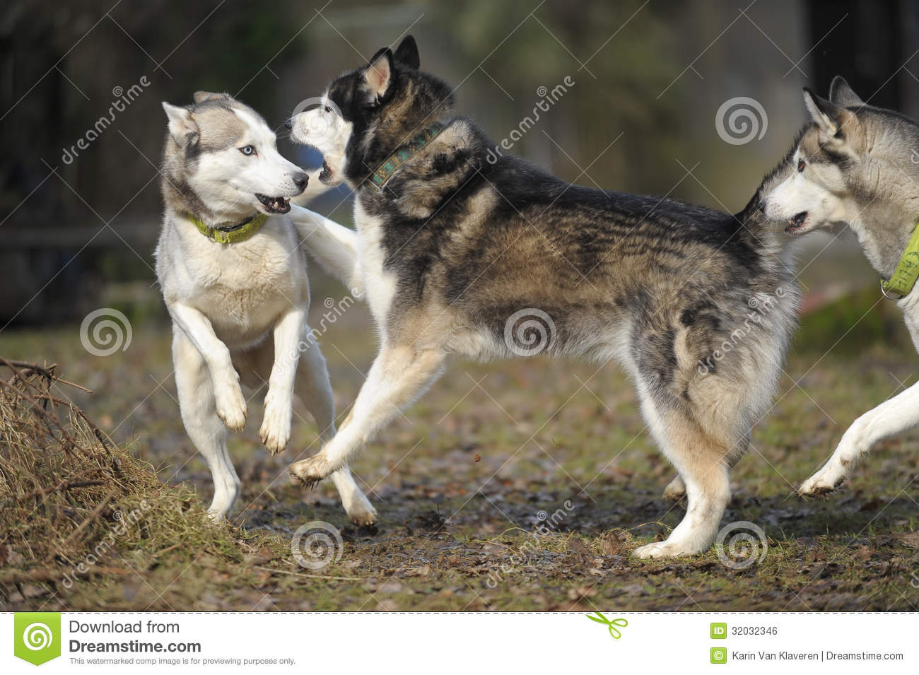 how to tell when dogs are playing or fighting