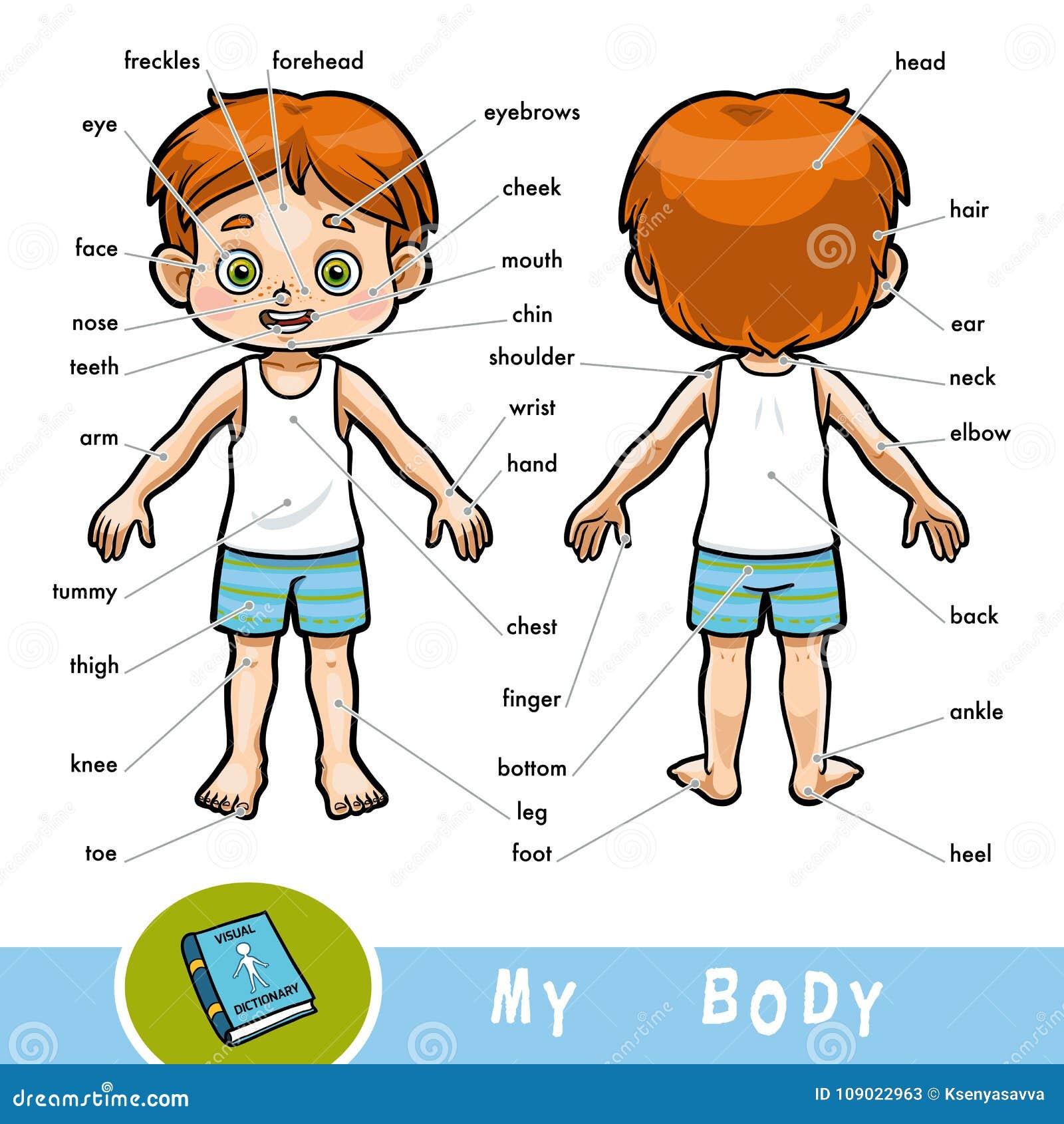 Sichtwörterbuch Für Kinder über Den Menschlichen Körper, Den Jungen ...