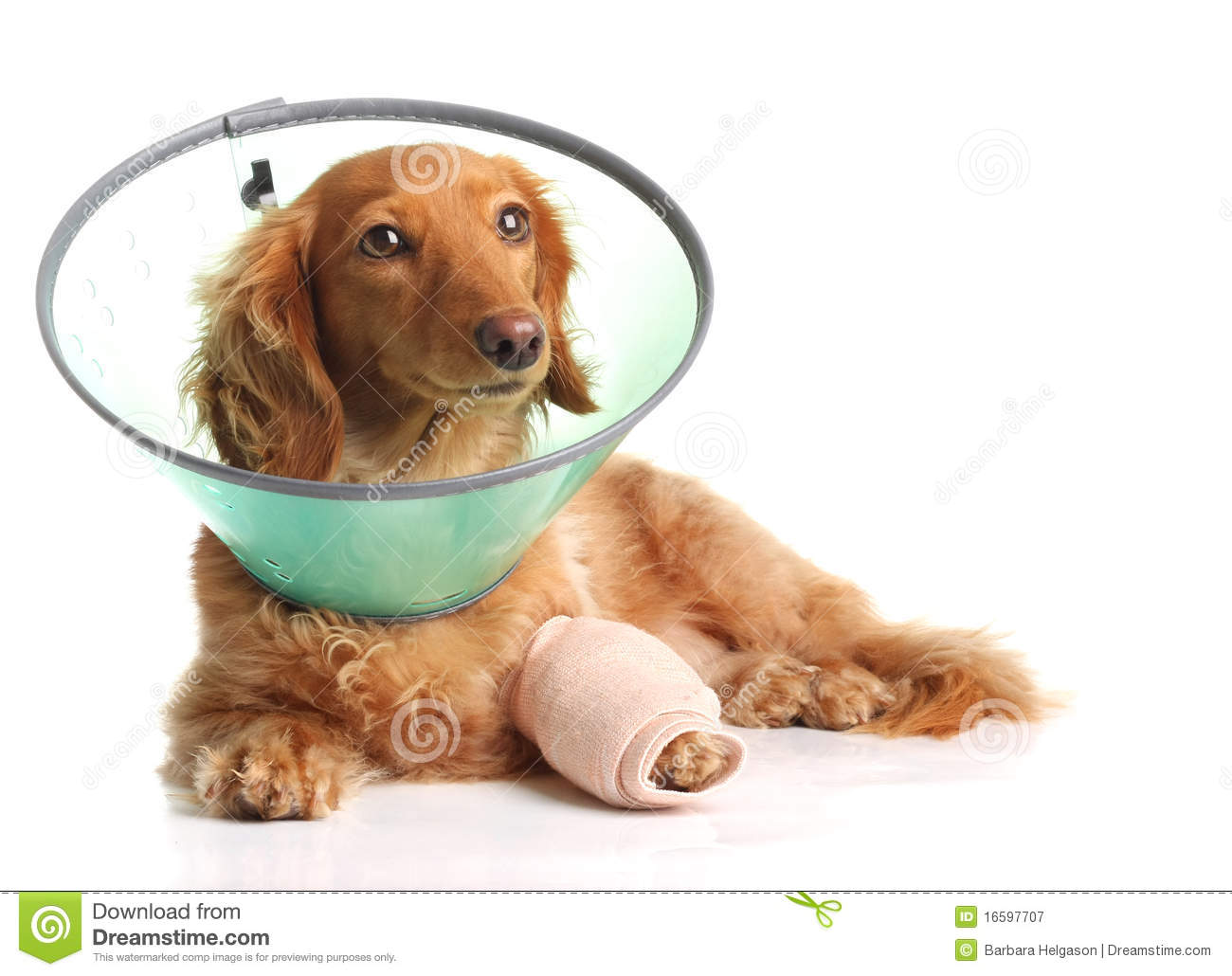 Sick Dog Royalty Free Stock Photography - Image: 16597707
