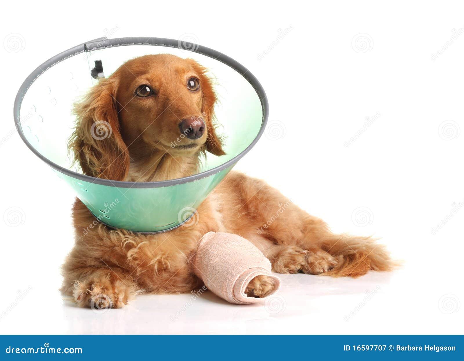 Sick Dog Royalty Free Stock Photography - Image: 16597707