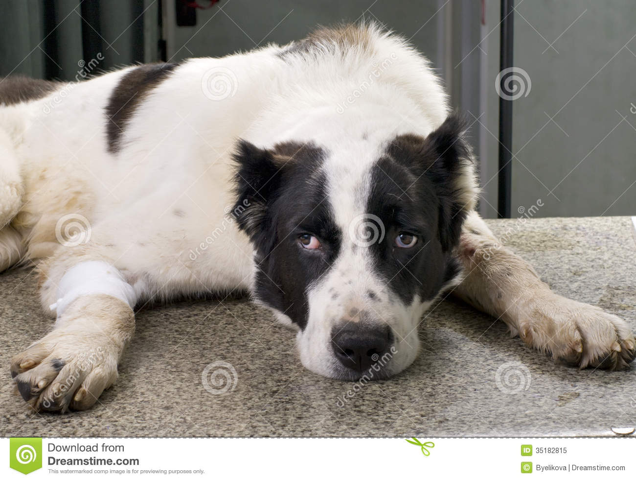 Download Sick dog stock image. Image of canine, animal, hold, mixed - 35182815