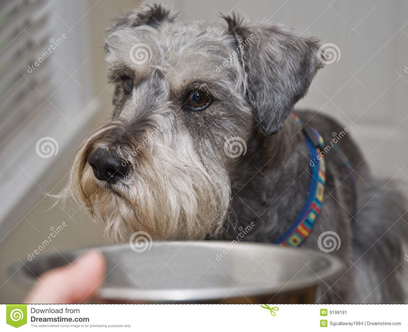 Sick Dog Won 39 T Eat Not Hungry Stock Image Image 9199191