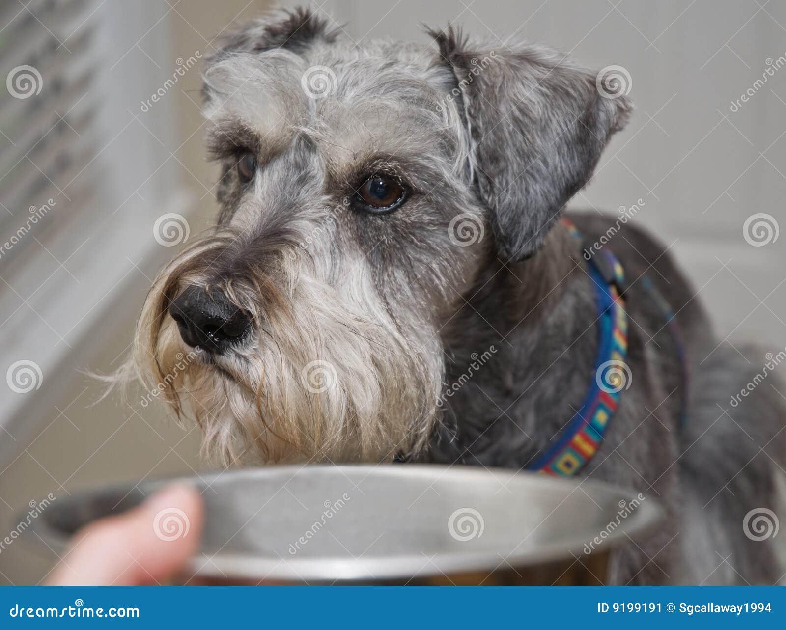 Собака отказывается от сухого корма, плохо ест сухой корм?