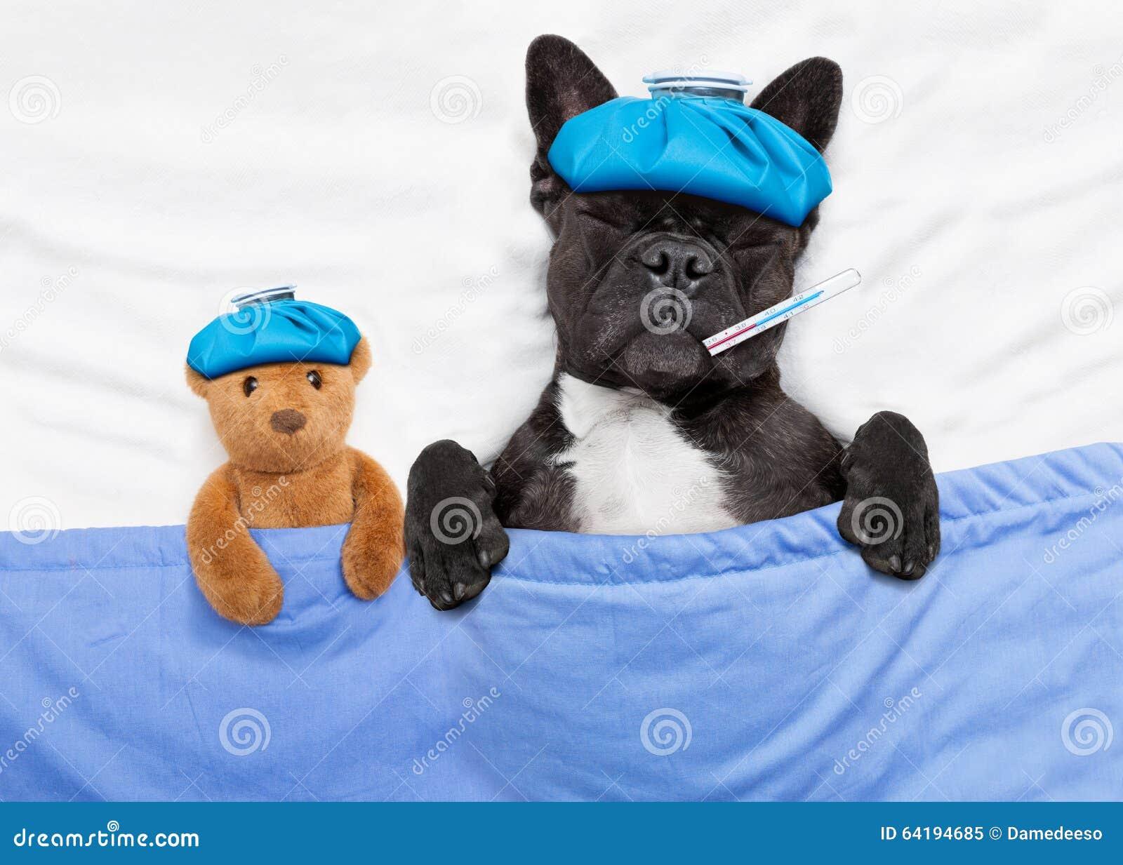 sick ill dog stock image image of hospital head