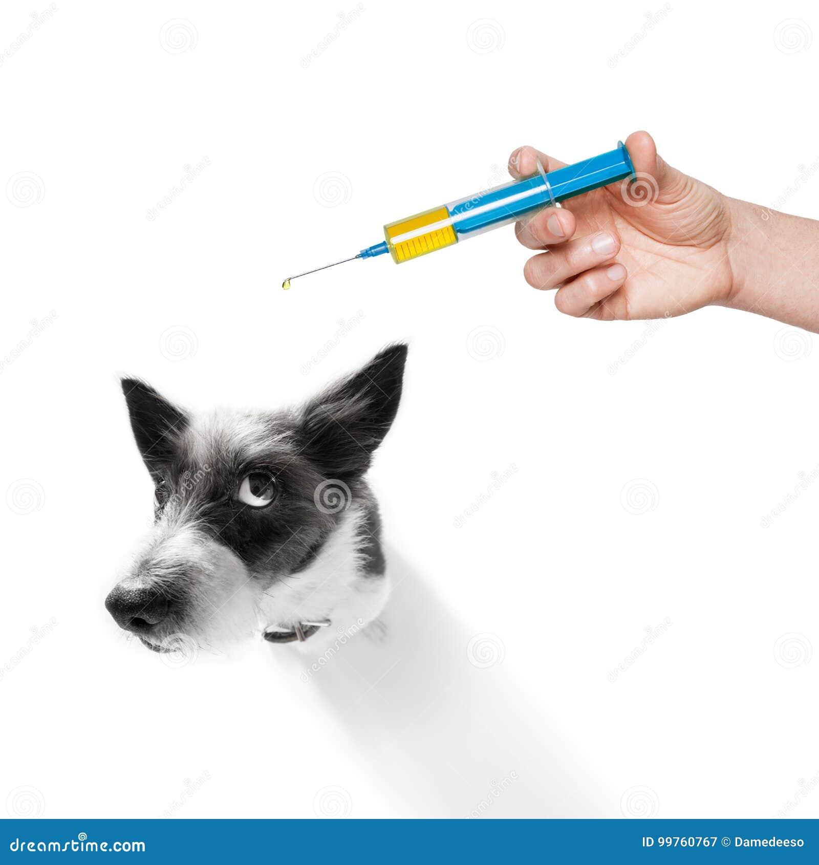 Dog and vaccine syringe