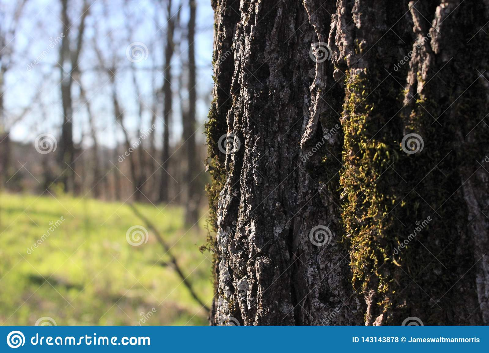 Tree with Moss Growing on Bark