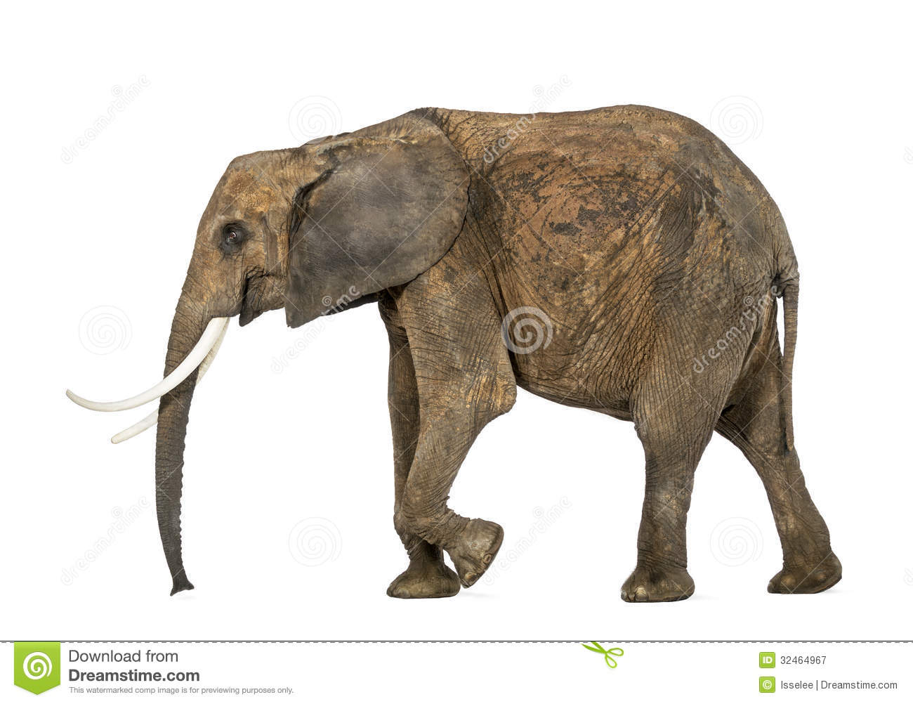 Side View Of An African Elephant Isolated Royalty Free