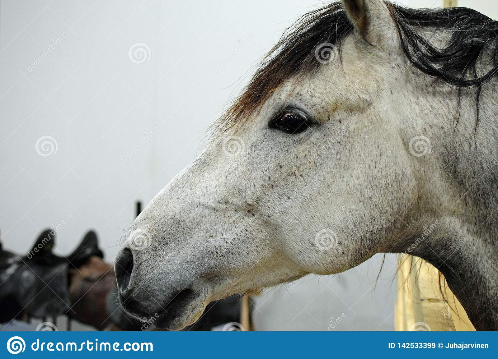 Side View Of Andalusian Horse Head Stock Image Image Of Close Closeup 142533399