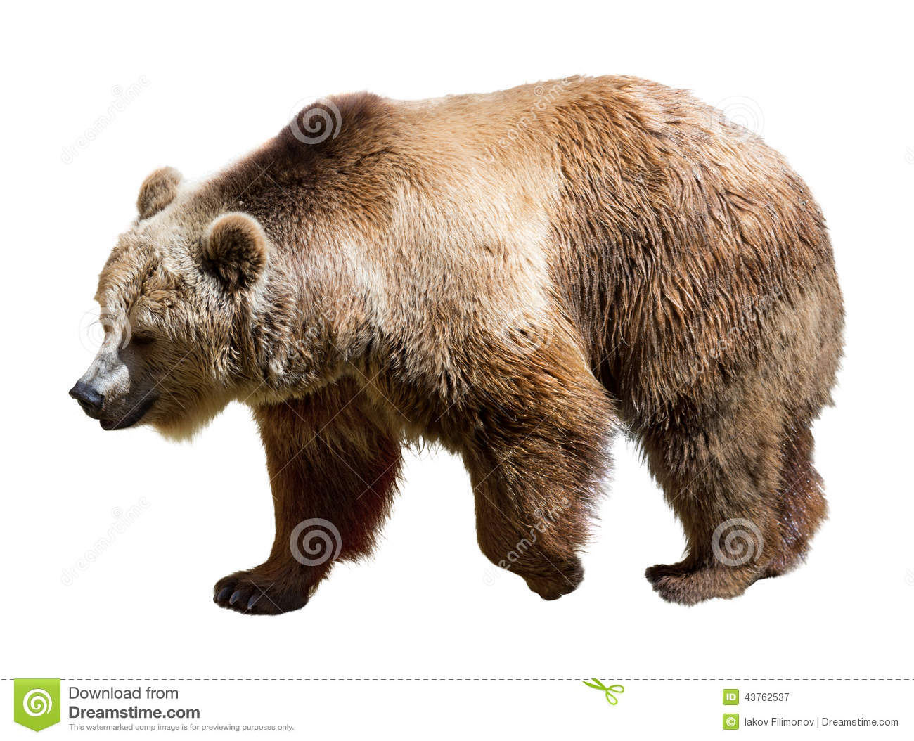 Side view of bear. Isolated over white
