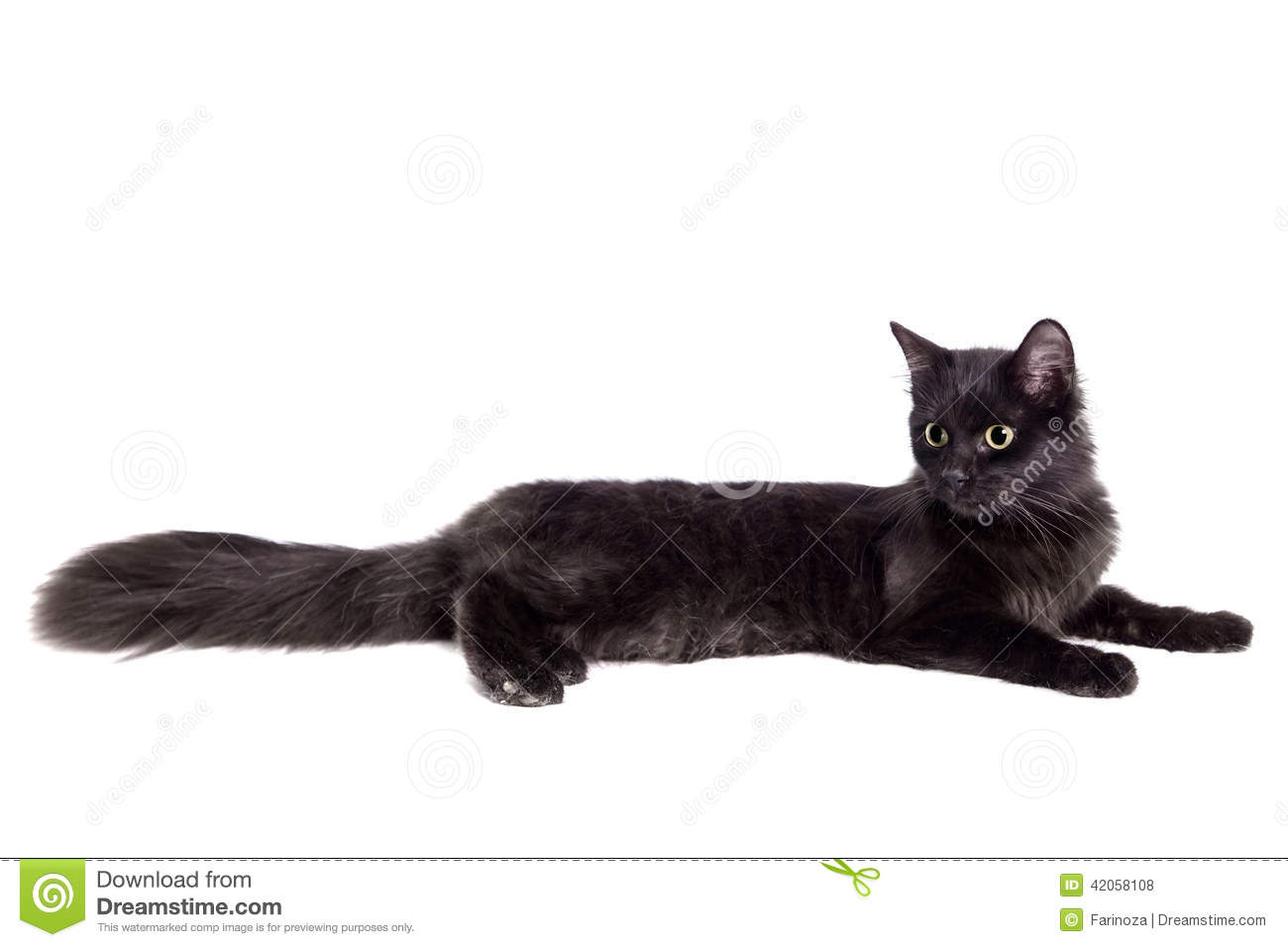 080a8e4334008 Side View Black Cat Walking Isolated White Stock Images - Download ...