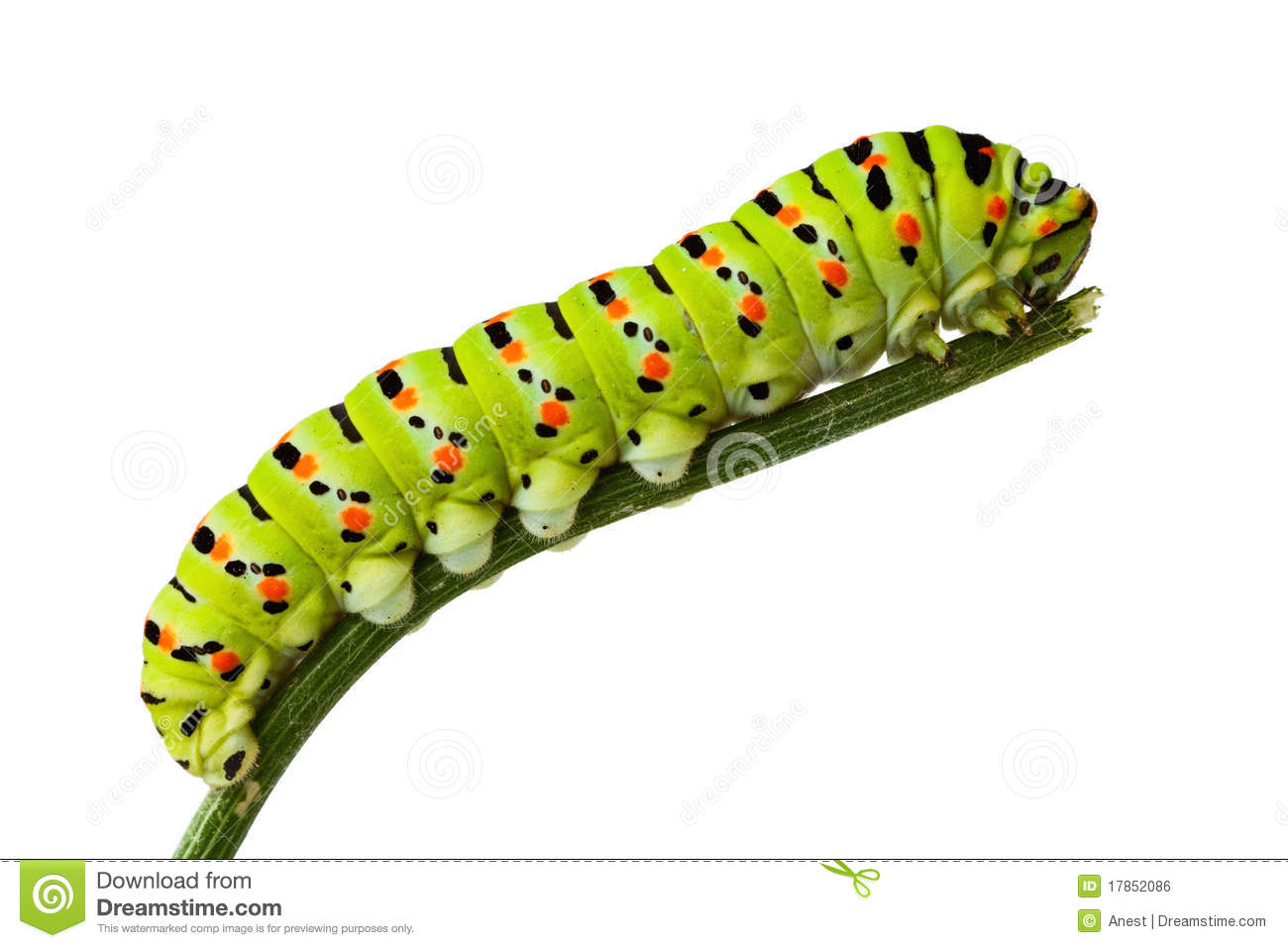Side View Of Caterpillar On Stem Stock Photo Image 17852086