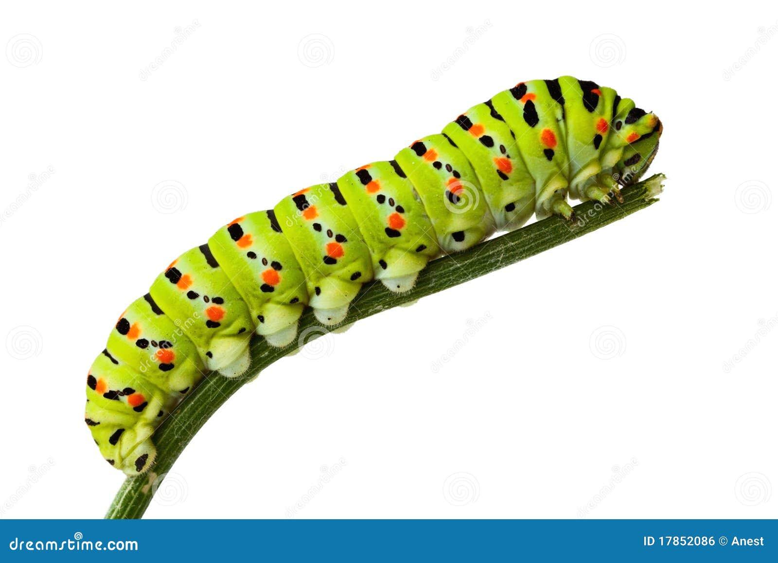 Side view of caterpillar on  Caterpillar