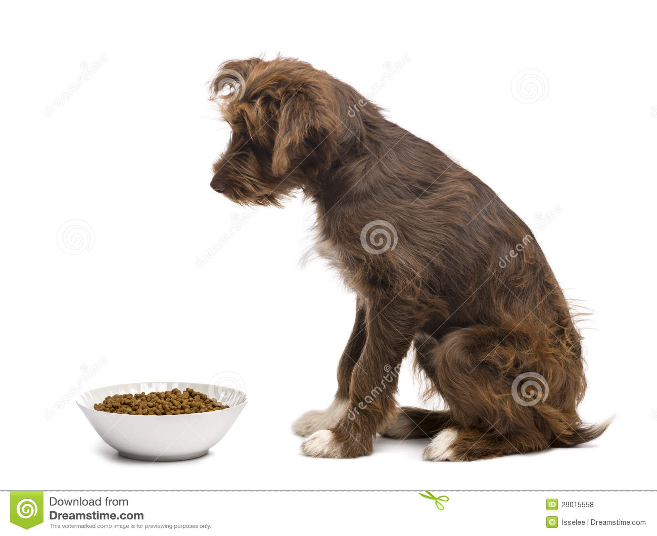 Dog People Food Overweight