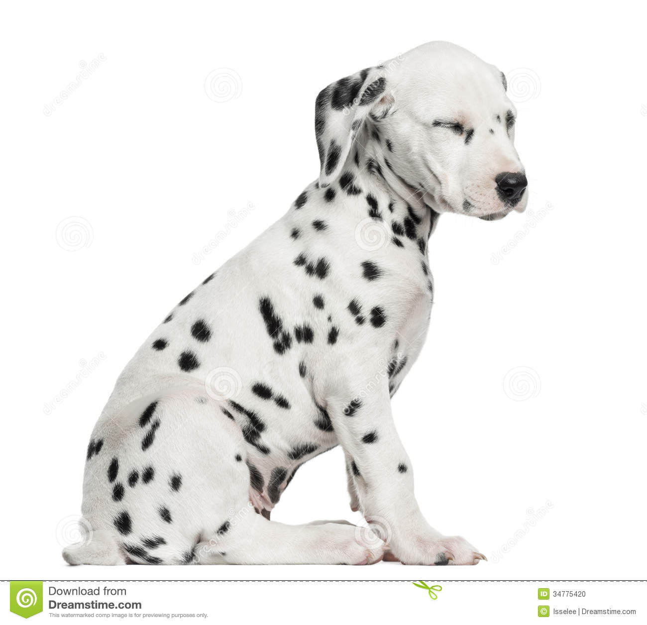 Side View Of A Dalmatian Puppy Sitting, Tired, Isolated Stock Photo ...