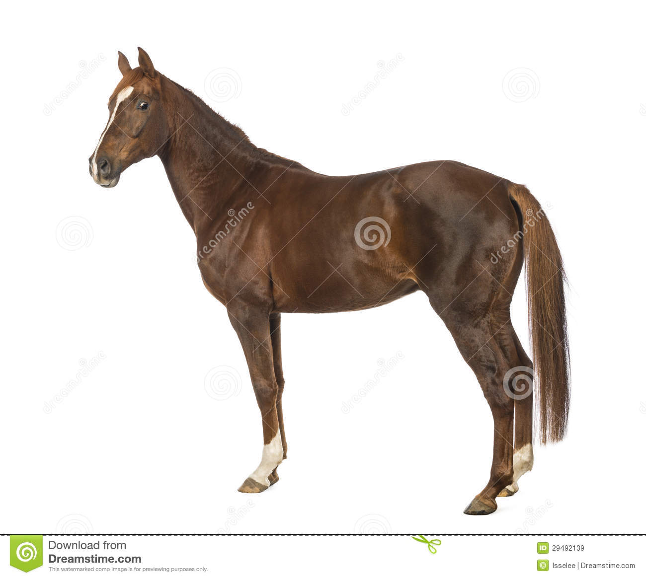 Side View Of A Horse Royalty Free Stock Images - Image ...