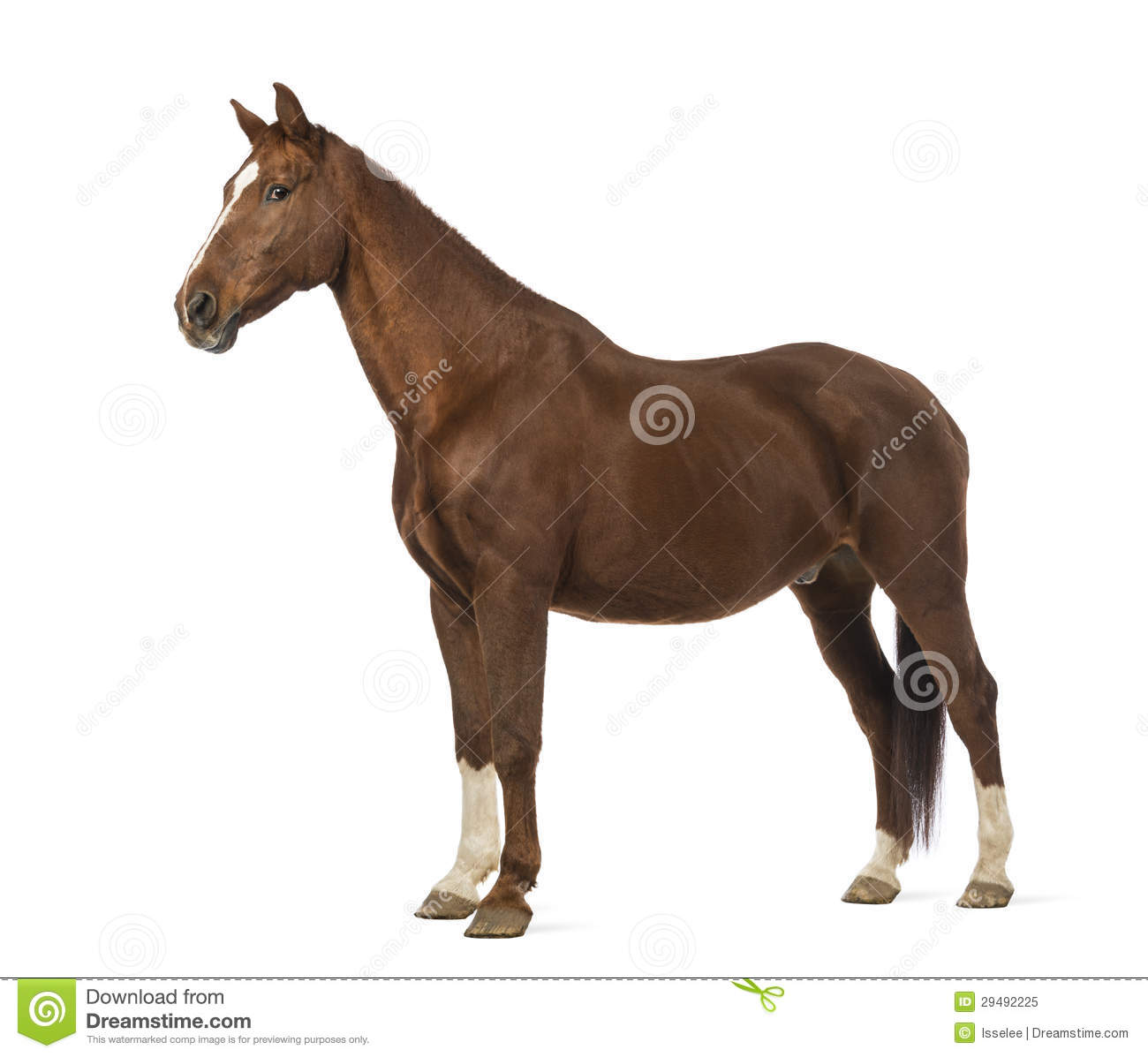 Side View Of A Horse Royalty Free Stock Photo - Image ...