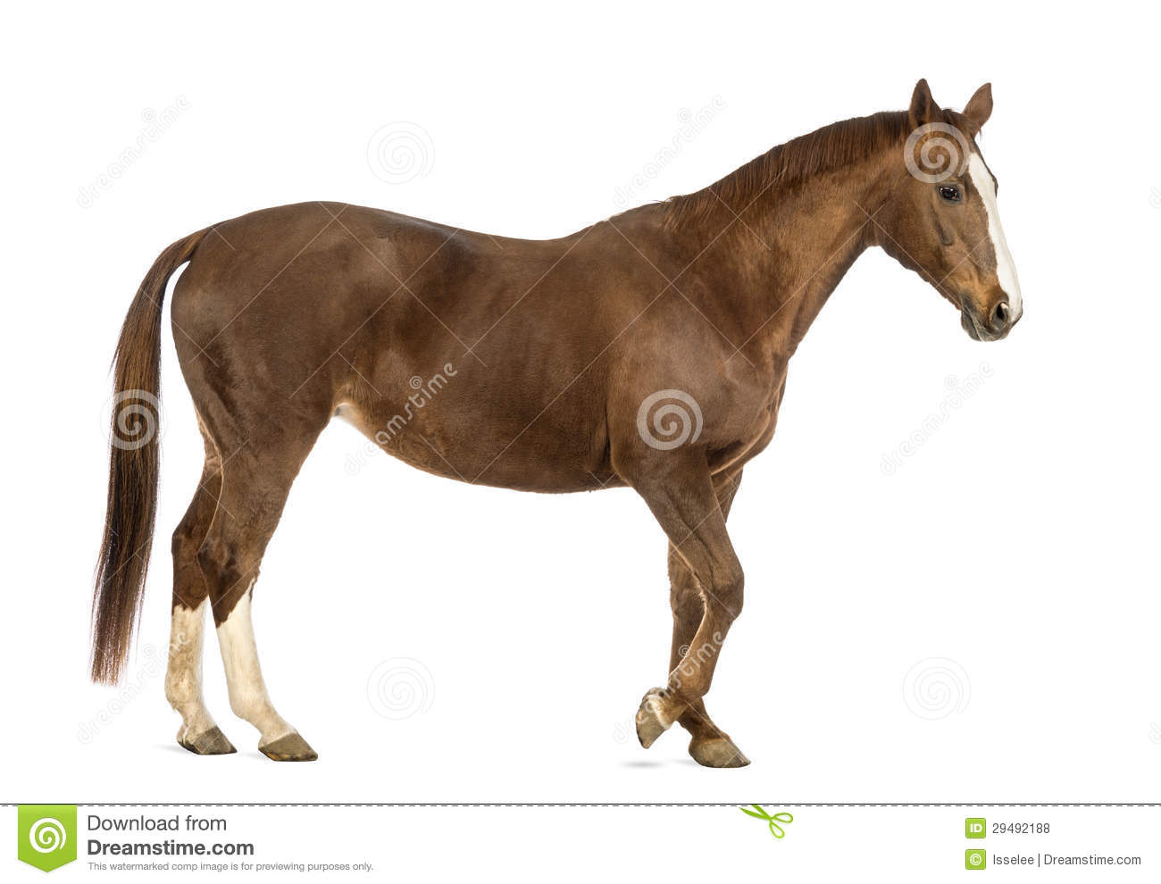 side view of a horse walking royalty free stock photos