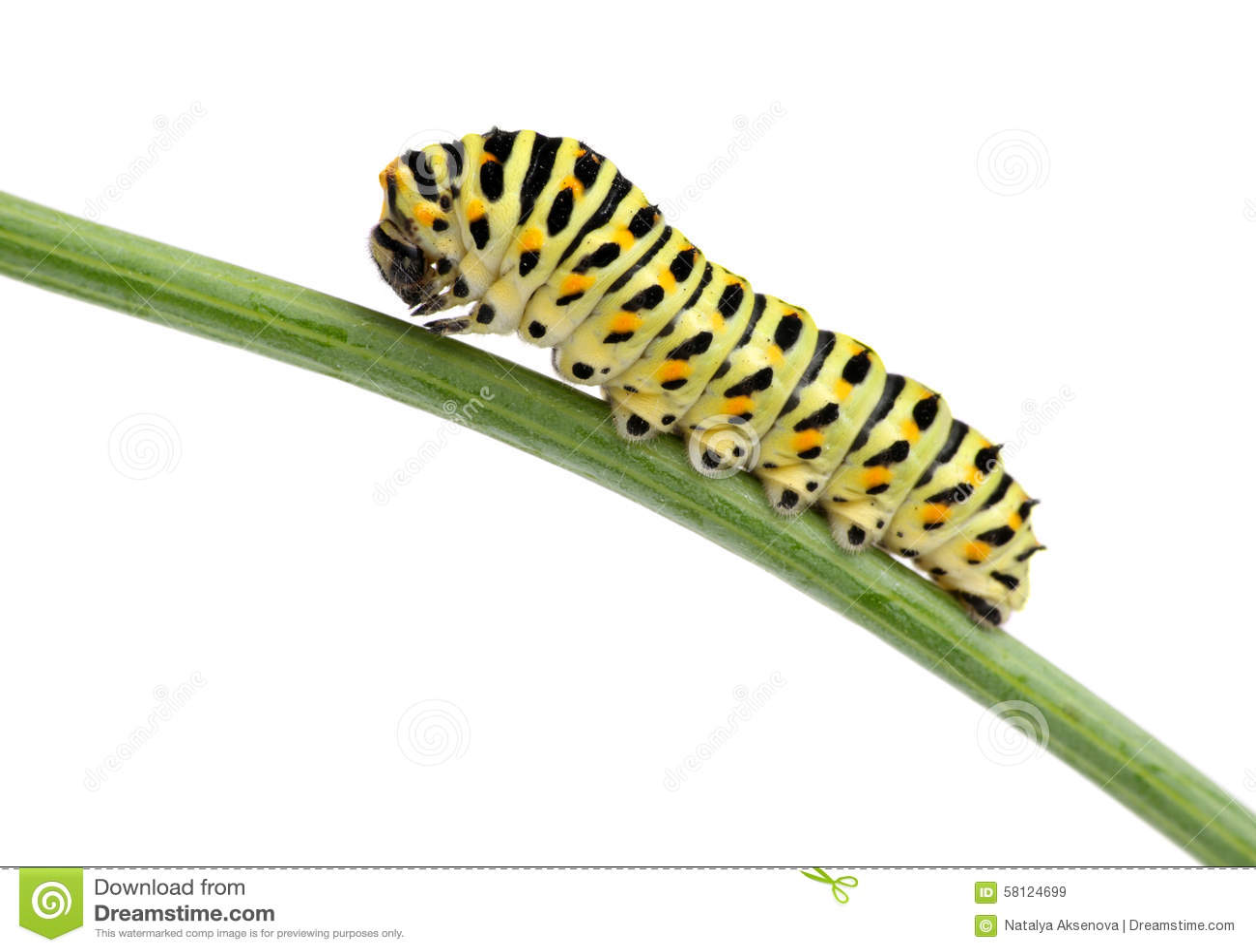 butterfly garden clipart